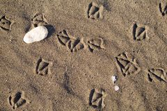 Bird foot print Stock Image