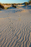 Bird foot print in the sand Stock Photos
