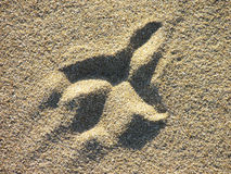 Bird footprint in the sand. Image of gull footprint in the sand of a beach Stock Image