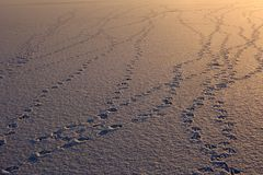 Bird footprints. Geese gathered on this frozen lake, before migrating. At dusk, they left behind silence and tracks Stock Photo