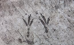 Bird footprints hardened on the concrete surface Royalty Free Stock Image