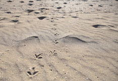 Bird footprints path wide view Royalty Free Stock Images