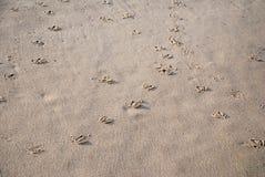 Bird footprints in sand Stock Image