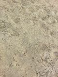 Bird footprints in the sand Royalty Free Stock Image