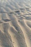 Bird footprints in the sand Stock Photos
