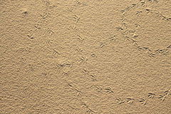 Bird footprints in the sand. Natural background Stock Photography