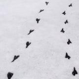 bird footprints in the snow... Royalty Free Stock Photo