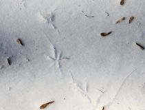 Bird footprints on snow Royalty Free Stock Images