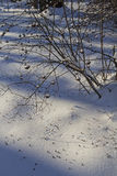 Bird footprints on snow in the winter forest. Stock Image