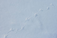 Bird footprints on white snow Stock Photo