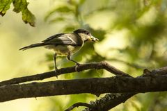 bird in forest Royalty Free Stock Photography