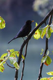 Bird in the forest in autumn Stock Photography