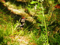 The bird in the forest. A small bird walks on the forest royalty free stock images