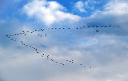 Bird Formation Stock Photo