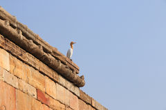 Bird on fort wall Stock Images