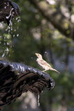 Bird in Fountain Stock Images