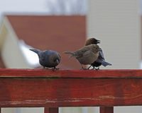 Bird friends. Birds looking for food on a cold winter day Royalty Free Stock Photos