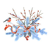Bird on frozen fir branch Royalty Free Stock Photos