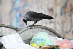 Bird on garbage dump Royalty Free Stock Photography