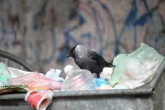 Bird on garbage dump Stock Photos