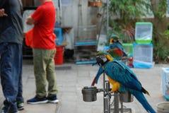 Bird garden. An exotic colorful parrot in Bird Garden in Mong Kok district of Hong Kong Royalty Free Stock Images