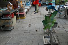 Bird Garden. An exotic colorful parrot in Bird Garden in Mong Kok district of Hong Kong Stock Images