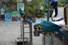 Bird Garden. An exotic colorful parrot in Bird Garden in Mong Kok district of Hong Kong Royalty Free Stock Photography