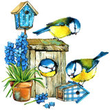 Bird and Garden flowers background. Royalty Free Stock Images