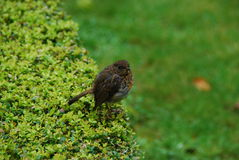 Bird in gardens of Kylemore Abbey Stock Photography