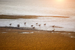Bird gathering at beach Stock Images