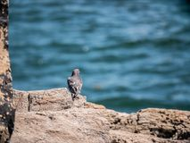 A Bird Getting Some Sun. On a rock in Maine stock image