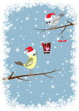 Bird gives a winter celebratory box. THE BIRD ON THE BRANCH GIVES THE GIFT TO OTHER BIRD Royalty Free Stock Photos