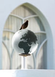 Bird on glass earth. Brown bird sit on glass earth Royalty Free Stock Photography
