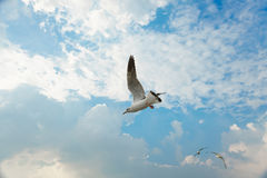 Bird gliding on cloud and sky Stock Photo