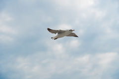 Bird gliding on cloud and sky Royalty Free Stock Image