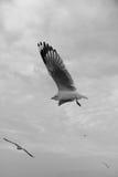 Bird gliding on sky Toned image Royalty Free Stock Image