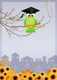 Bird graduate Stock Image