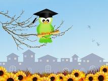 Bird graduate Royalty Free Stock Photos