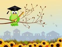 Bird graduate Stock Photography