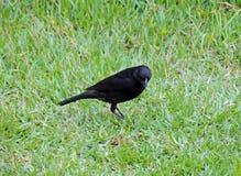 Bird on the grass Stock Photos