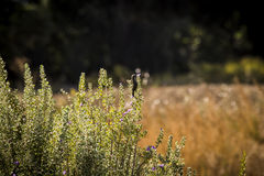 Bird on grass in israel Royalty Free Stock Images