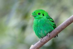 Bird. Green Bird on the branch Stock Photos