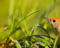 Bird in a green grass among the sun and the nature Stock Photos