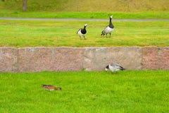 Bird on a green lawn. Stock Photos