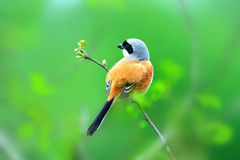 A Bird in Green Scenery of Spring Stock Photo