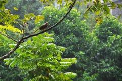 Bird on green tree Stock Photo