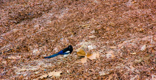 Bird on ground and arid ground. In winter Stock Image