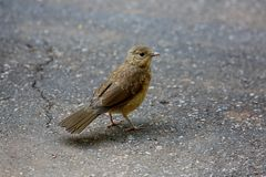 Bird on the ground Royalty Free Stock Photography