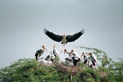 Free भरतपुर,राजस्थान, भारत Bird Group On Tree, Keoladeo Sanctuary, Bharatpur, Rajasthan, India Royalty Free Stock Images - 140944569