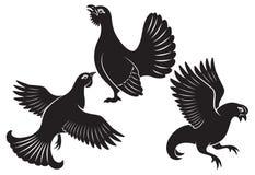 Bird grouse royalty free illustration